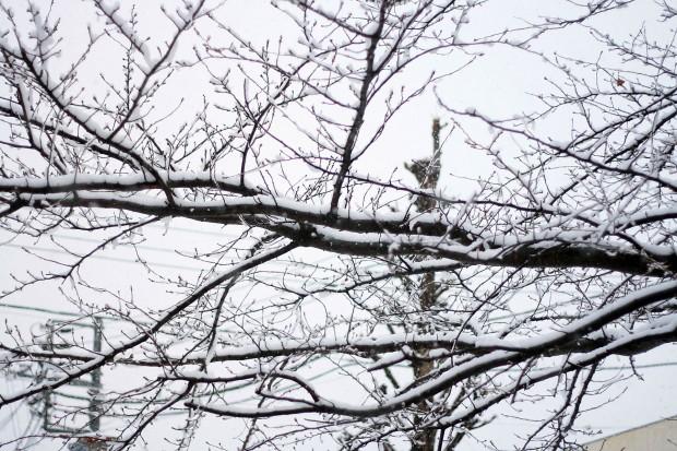 雪景色014