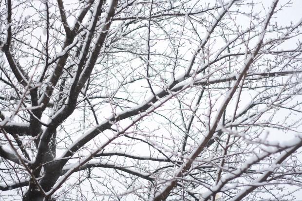 雪景色015