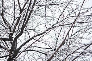 雪景色サムネイル