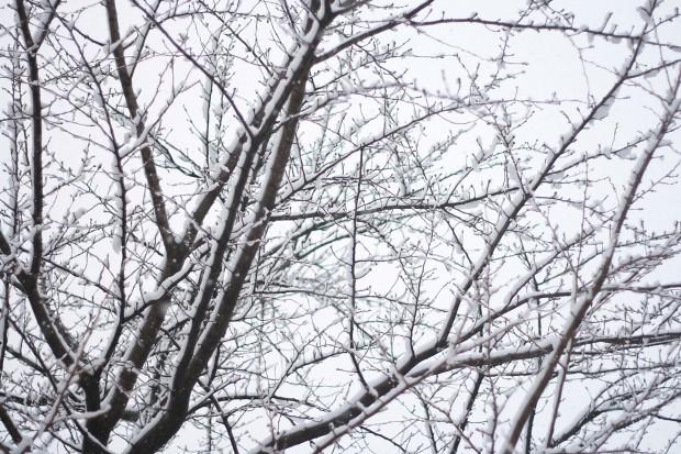 雪景色018