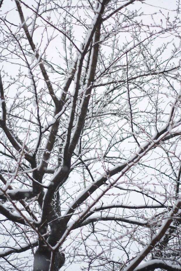 雪景色019