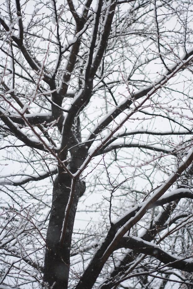 雪景色030