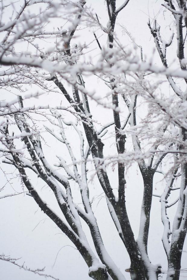 雪景色033