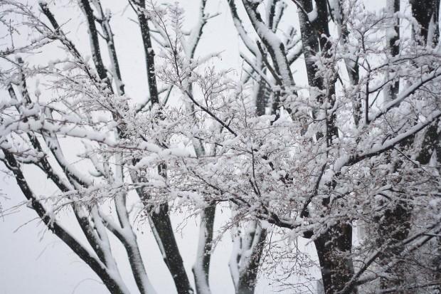 雪景色035