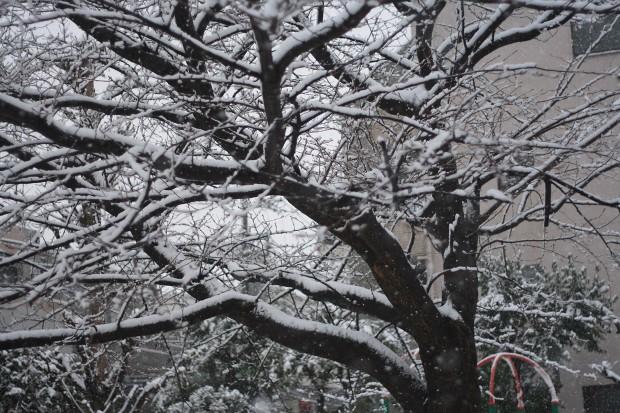 雪景色038