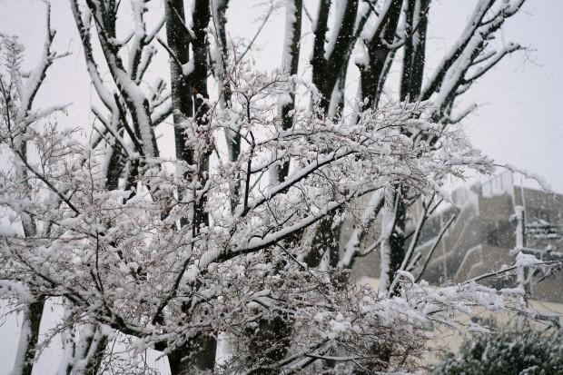 雪景色039
