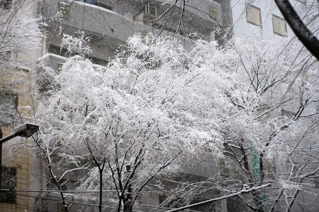 雪景色043