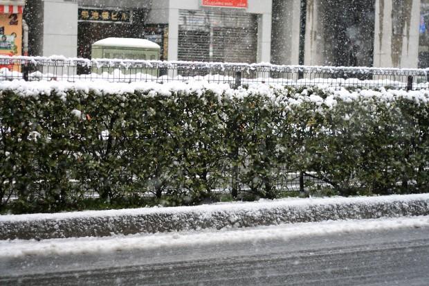 雪景色056