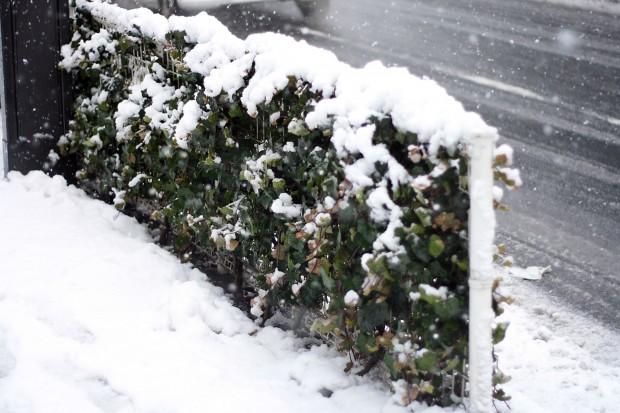 雪景色057