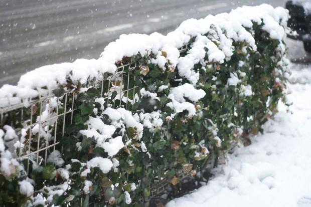 雪景色059