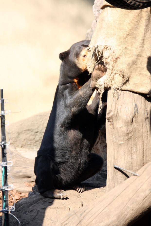 熊(クマ)フリー写真素材001