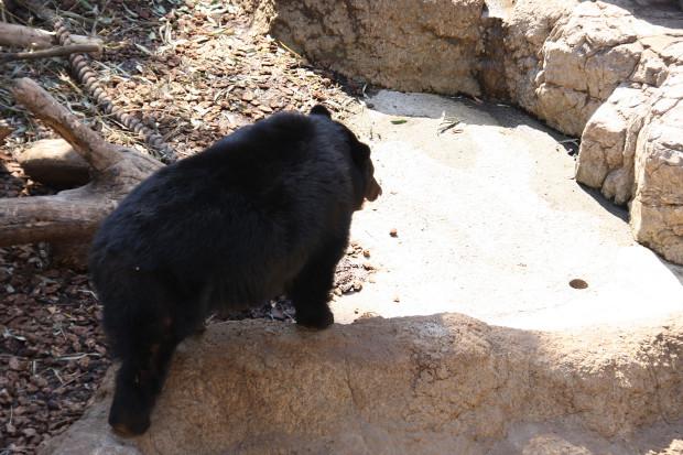熊(クマ)フリー写真素材004