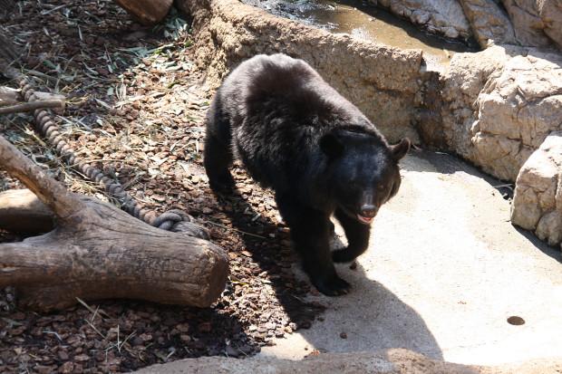 熊(クマ)フリー写真素材005