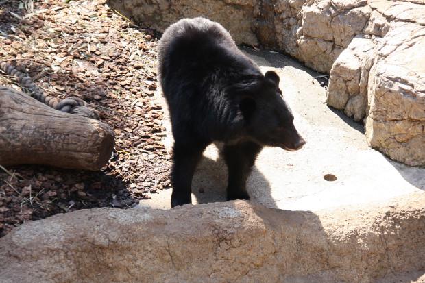 熊(クマ)フリー写真素材006