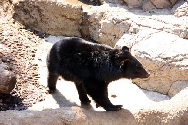熊(クマ)フリー写真素材007