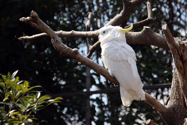 鳥フリー写真素材07