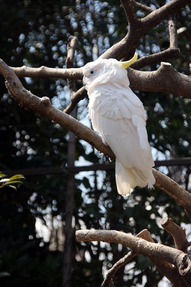 鳥フリー写真素材069