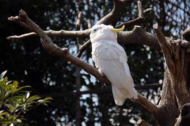 鳥フリー写真素材070