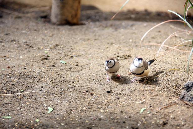 鳥フリー写真素材073