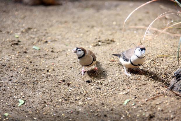 鳥フリー写真素材074