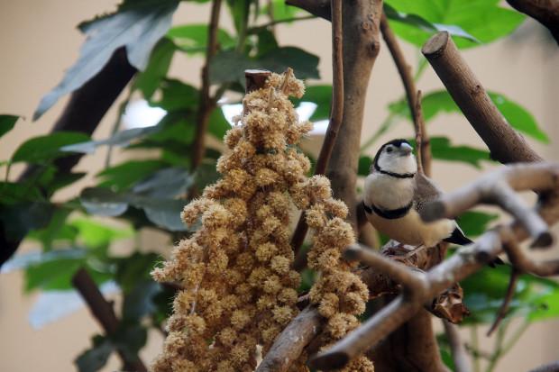 鳥フリー写真素材076