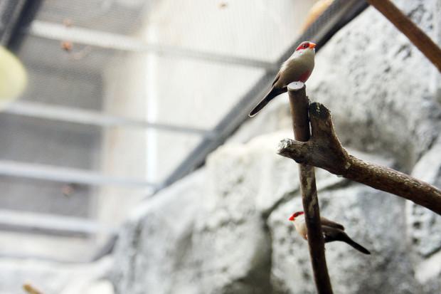 鳥フリー写真素材077