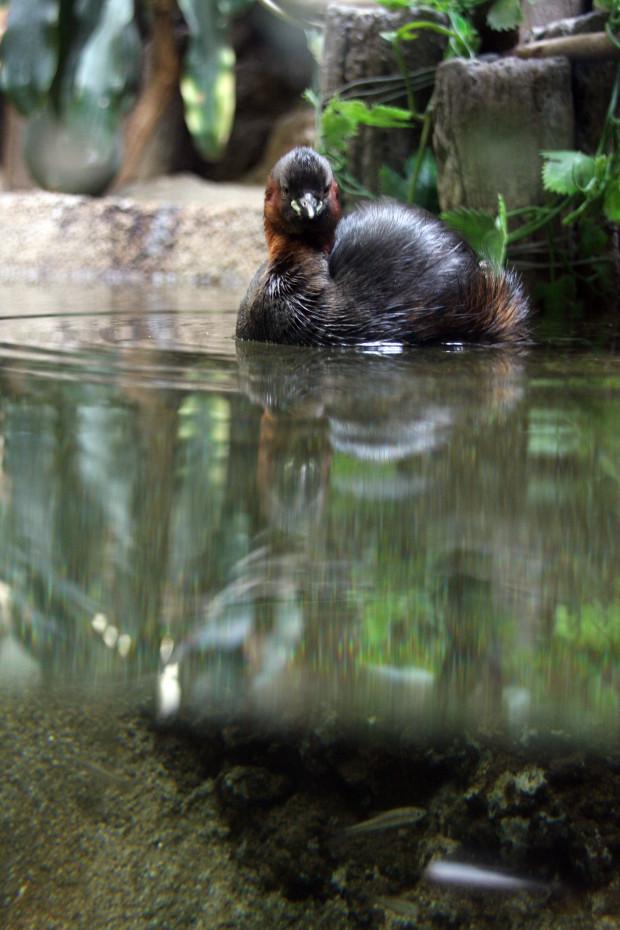 鳥フリー写真素材080