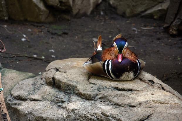 鳥フリー写真素材081