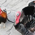 鶏(ニワトリ、にわとり)サムネイル