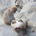 猿(日本猿)サムネイル