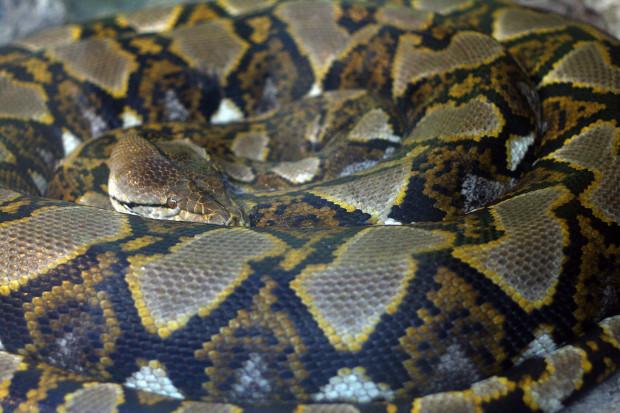 蛇(ヘビ)001