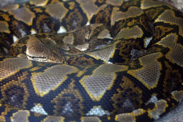 蛇(ヘビ)002
