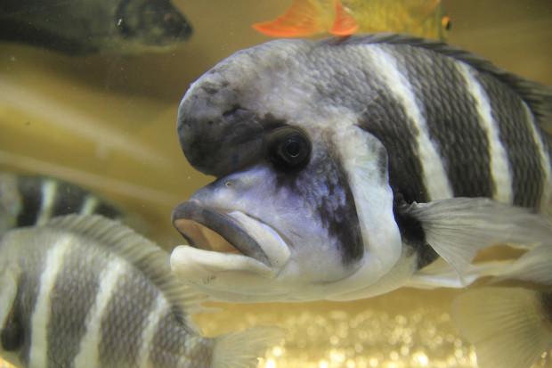 魚(フロントーサ)097