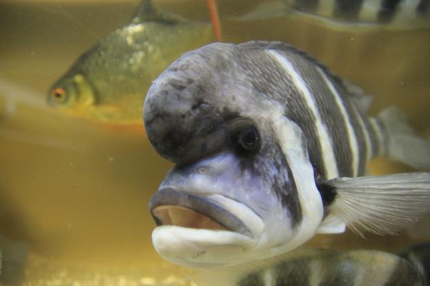 魚(フロントーサ)098