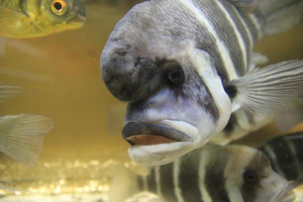 魚(フロントーサ)099