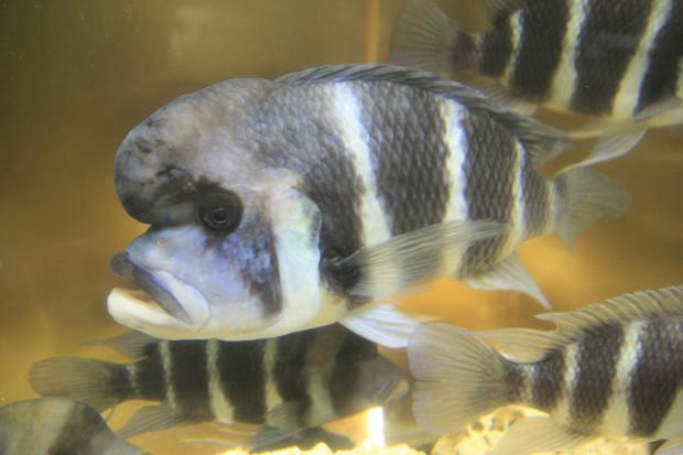 魚(フロントーサ)100