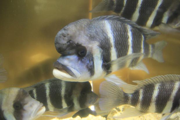 魚(フロントーサ)101