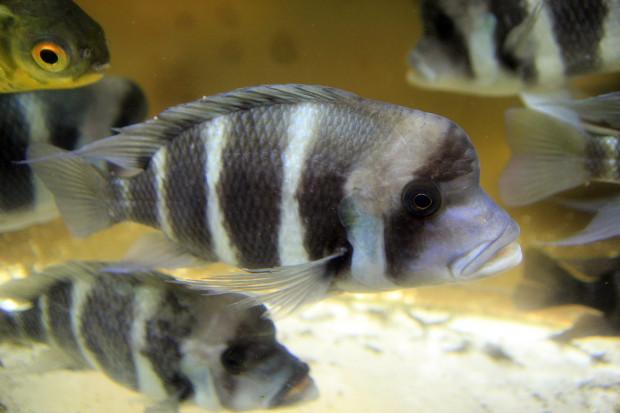 魚(フロントーサ)102