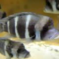魚(フロントーサ)サムネイル