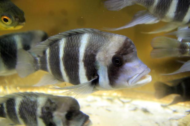 魚(フロントーサ)103
