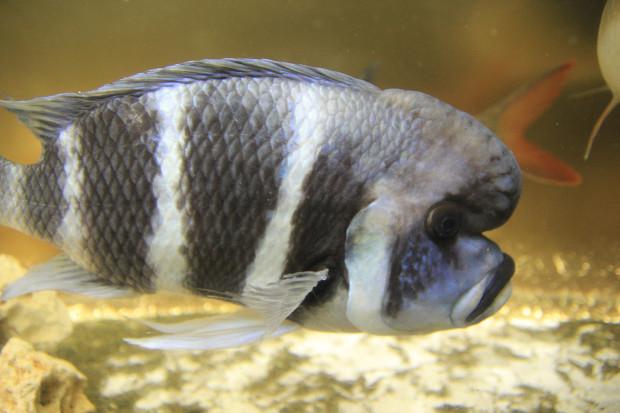 魚(フロントーサ)104