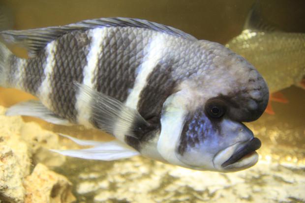 魚(フロントーサ)105
