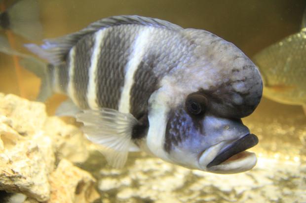 魚(フロントーサ)106
