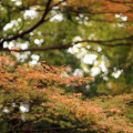 紅葉(こうよう・もみじ)サムネイル
