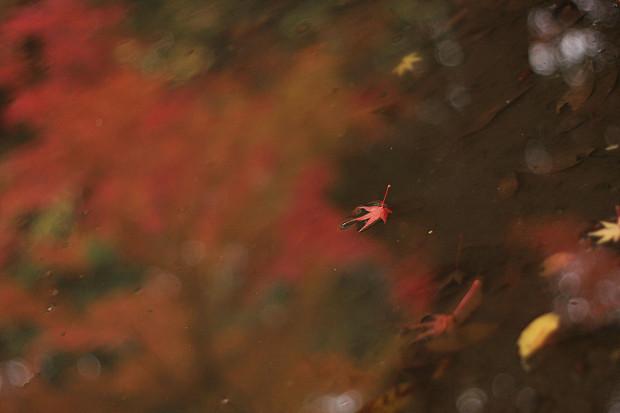 紅葉(こうよう・もみじ)163