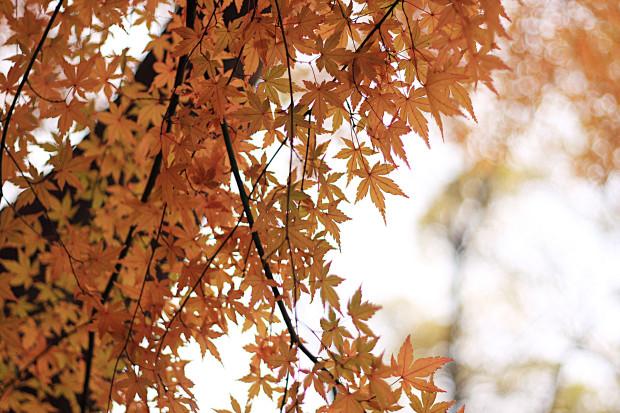 autumn-191