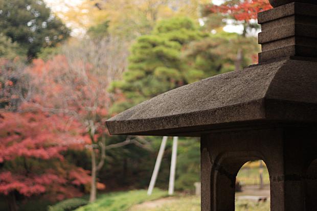 紅葉(こうよう・もみじ)194