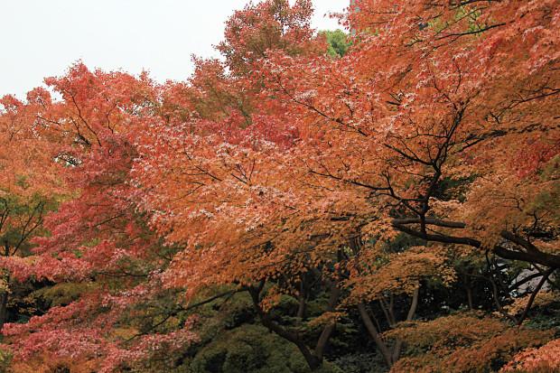 紅葉(こうよう・もみじ)206