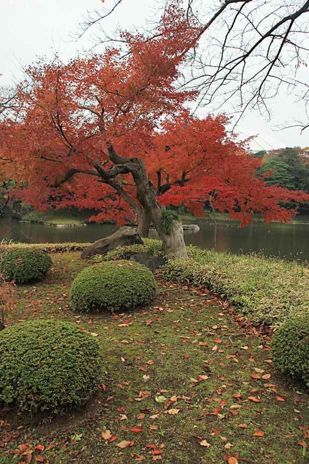 紅葉(こうよう・もみじ)207