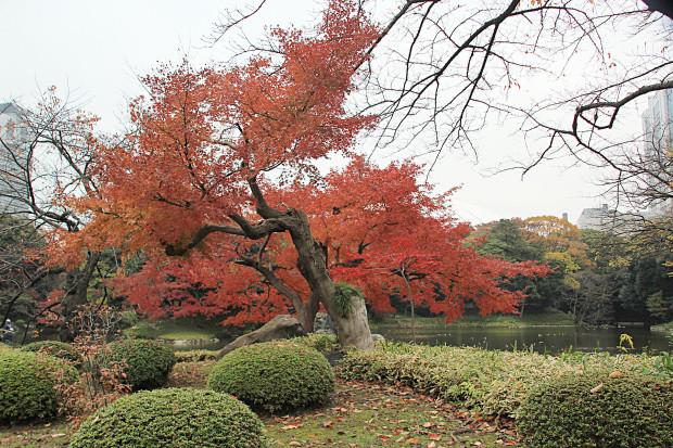 紅葉(こうよう・もみじ)208